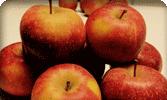 pommes-panier-blomet