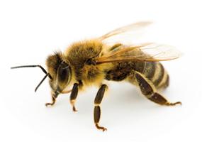 abeilles-Panier-Blomet